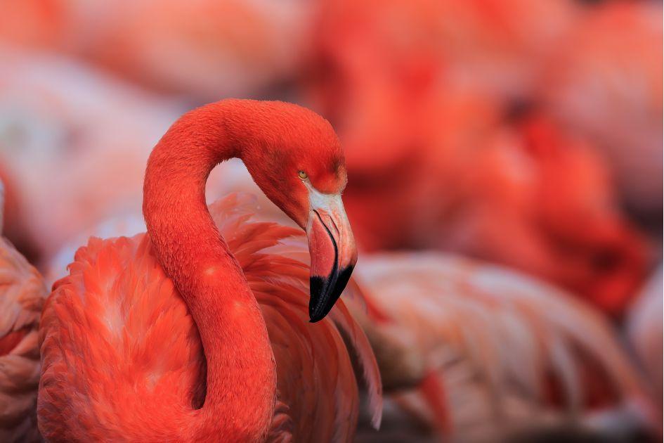 Flamingo gardens - Flamingo gardens fort lauderdale ...